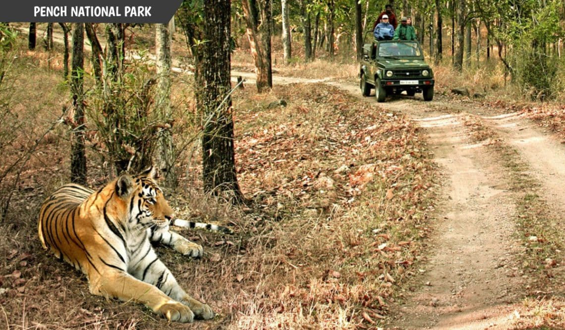 Best National Park in India to see Tigers