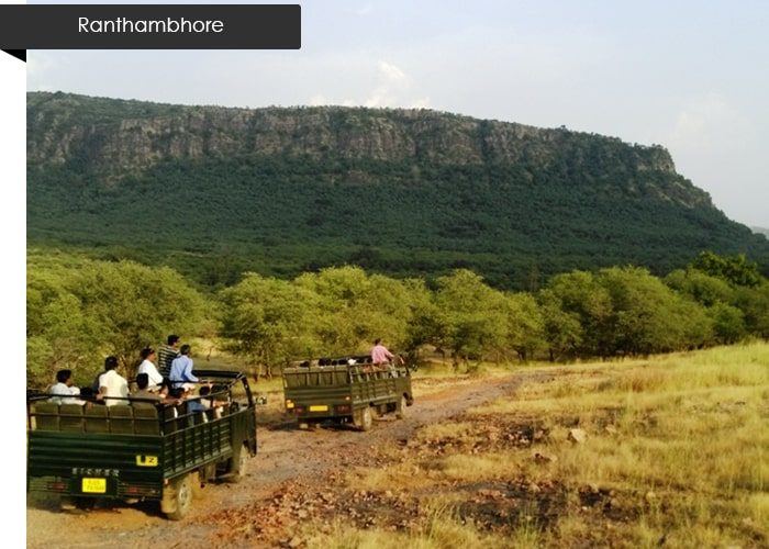 honeymoon-ranthambhore